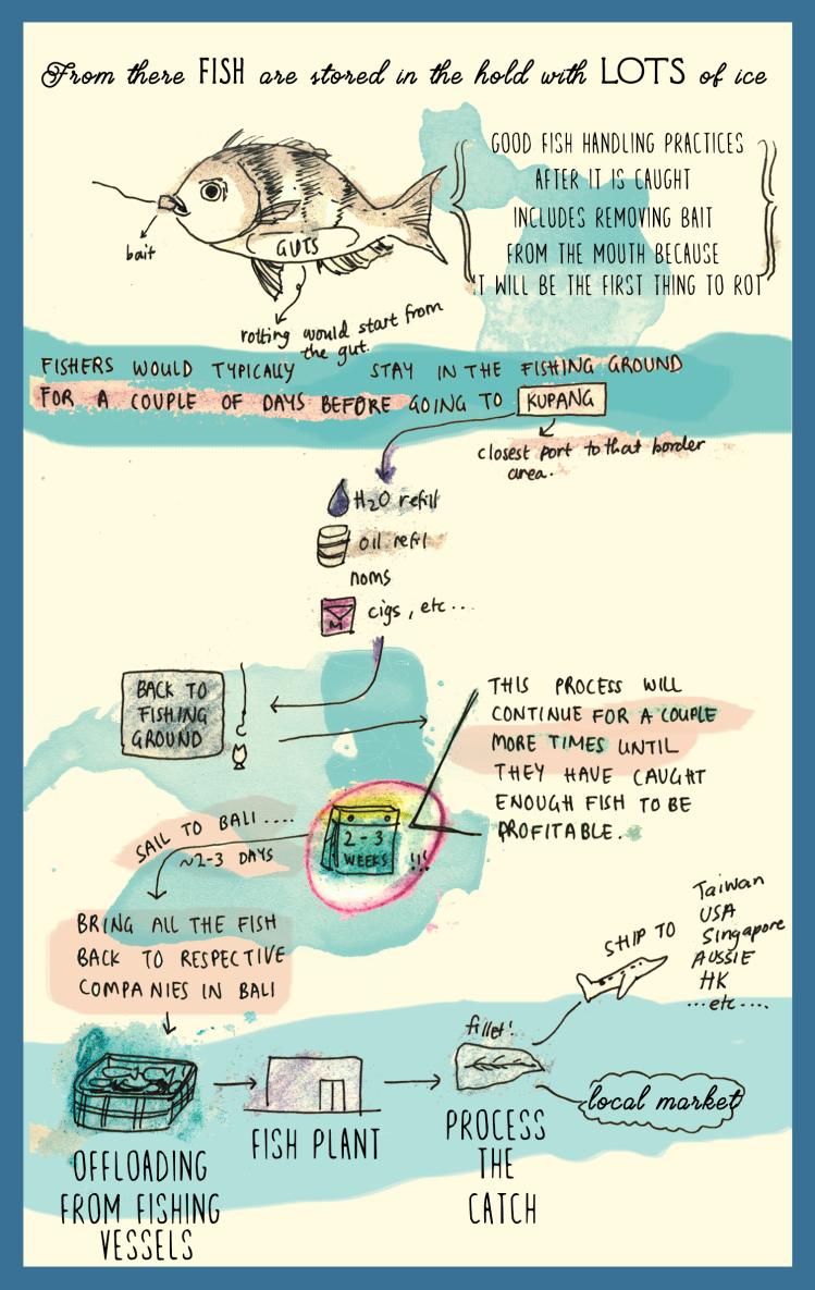 Indonesian fishery infographic